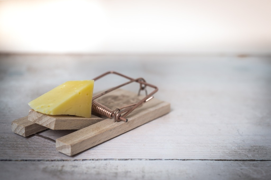 a mousetrap avoiding pain is a trap emotional and physical pain